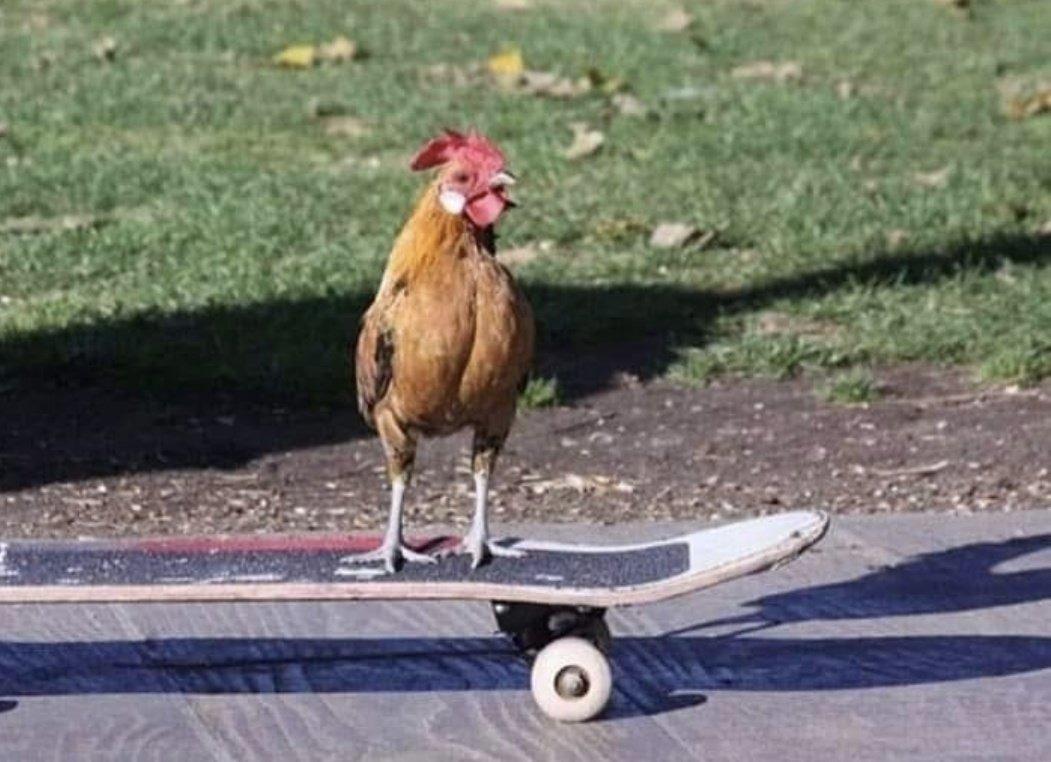 Pare tudo que está fazendo e curta o Elieja skatista - meme