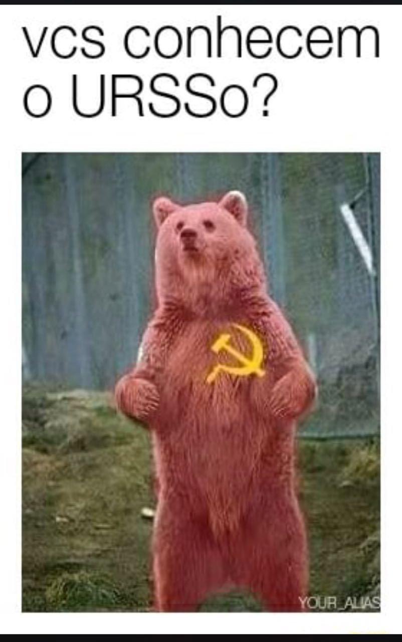 Urso - meme
