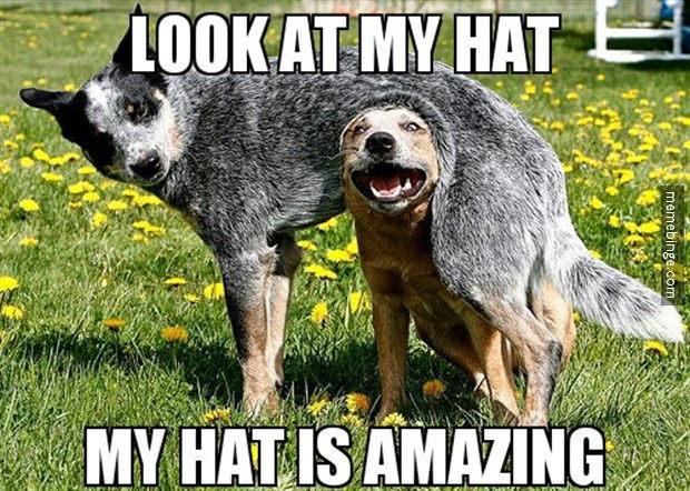 Hats - meme