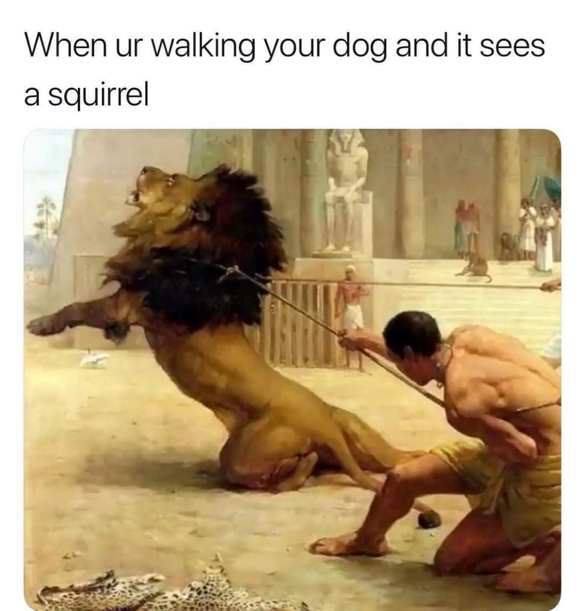Those squirrels are up to something - meme