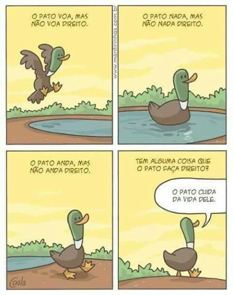 Seja como um pato - meme