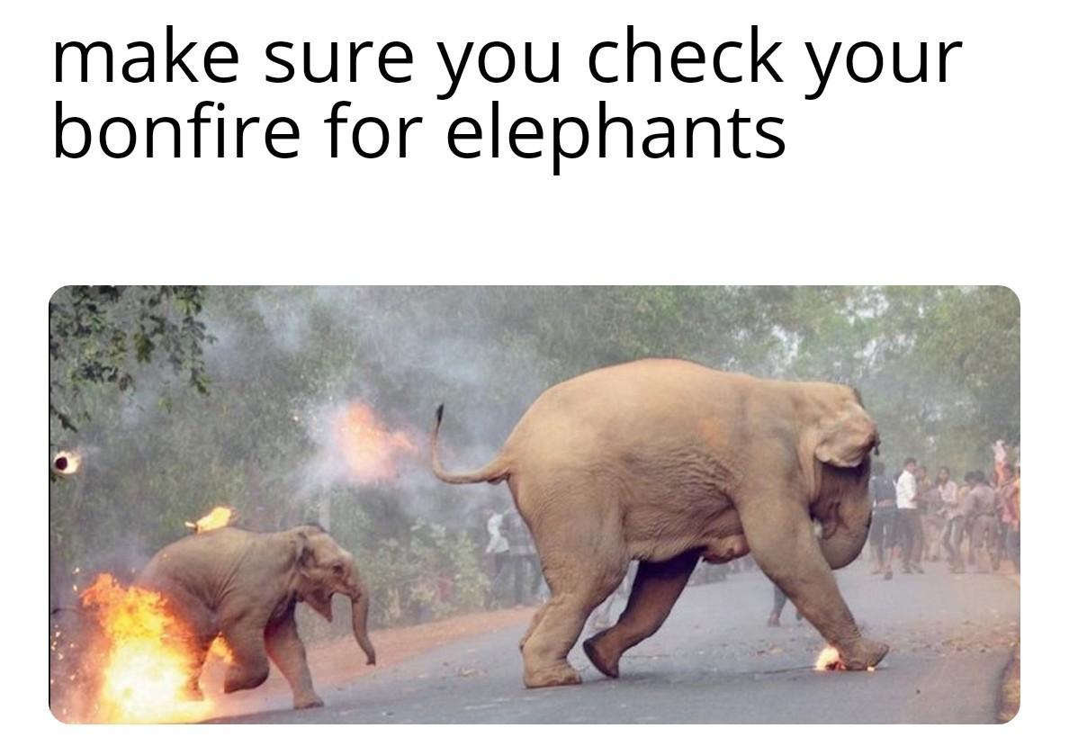 Beware of elephants - meme