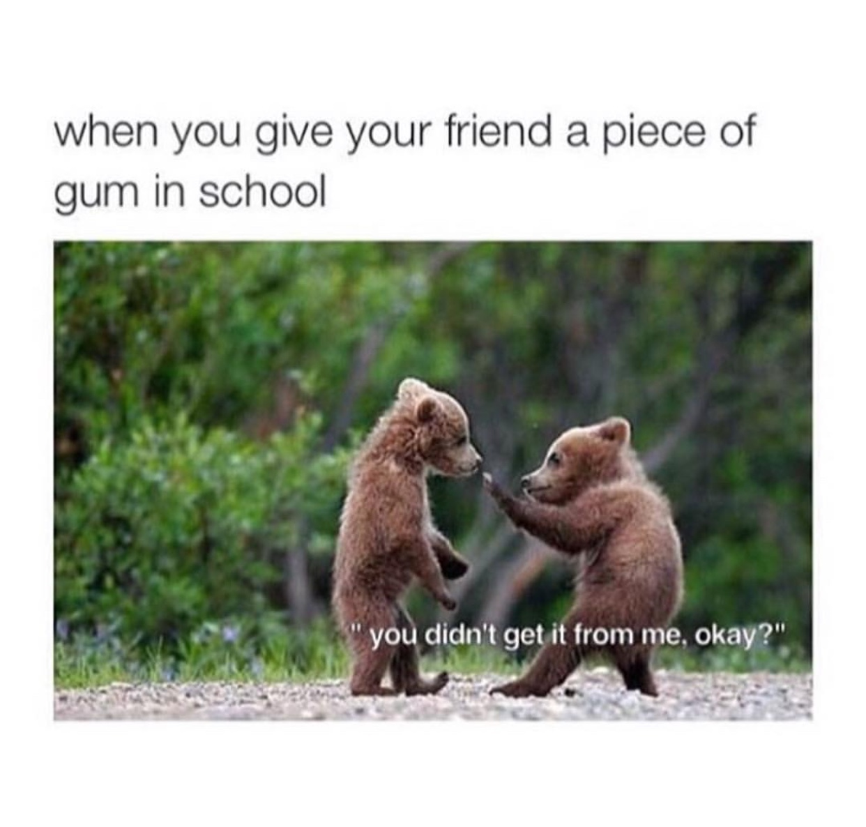 when you give someone a gum - meme