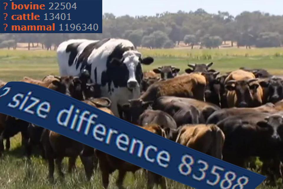 Cow_IRL - meme