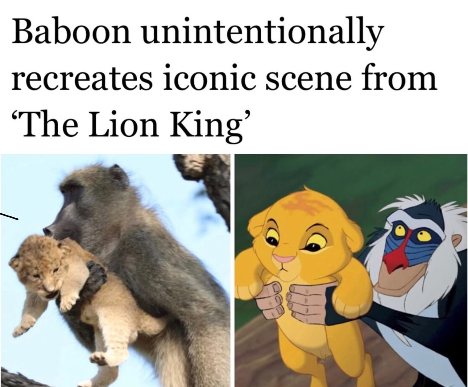 Lion king - meme