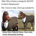 Mr. Horse