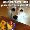 Health doggo