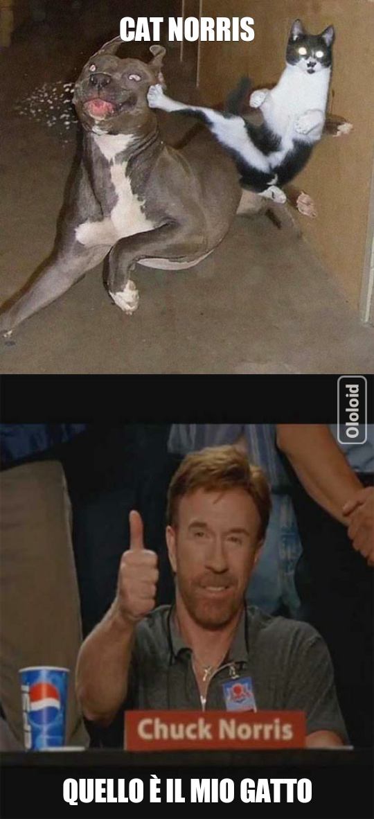 Povero cane - meme