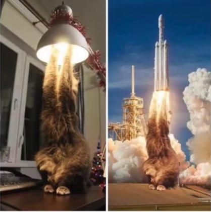 Blast off, little feline - meme