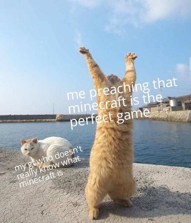 Bad kitty - meme