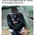 Planet of the Apes...