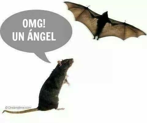 la rata Ángel - meme