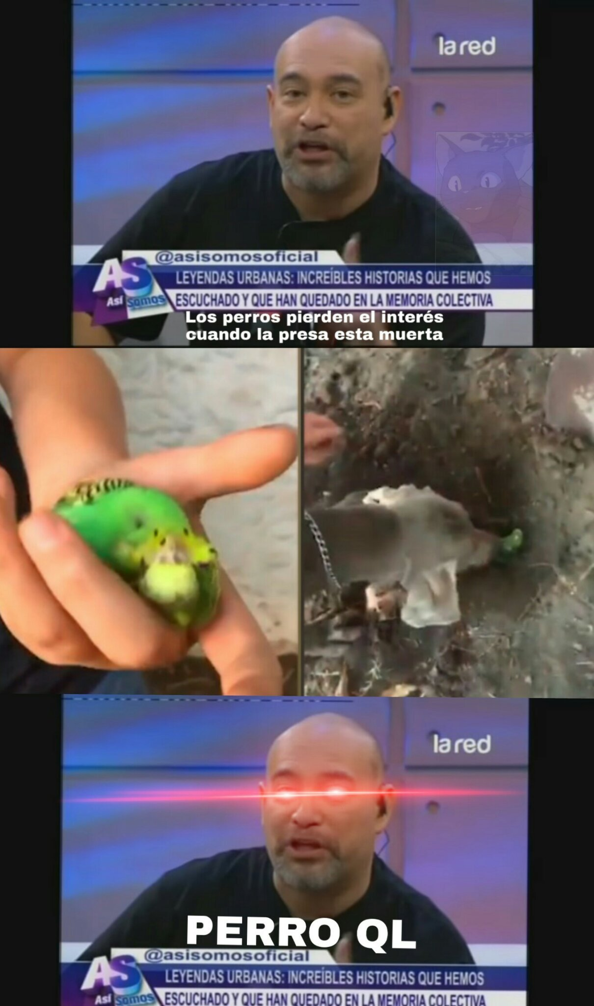 Perro weon - meme