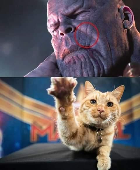 Tenha medo desse gato - meme