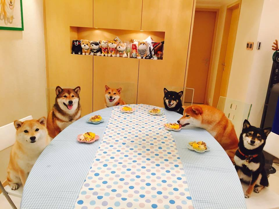 Doggo table... No humans in the table - meme