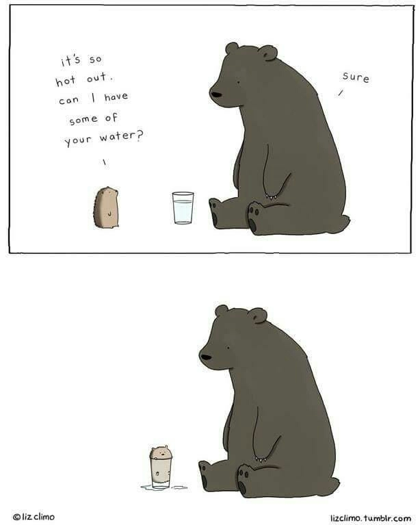 A kind bear that got confused - meme