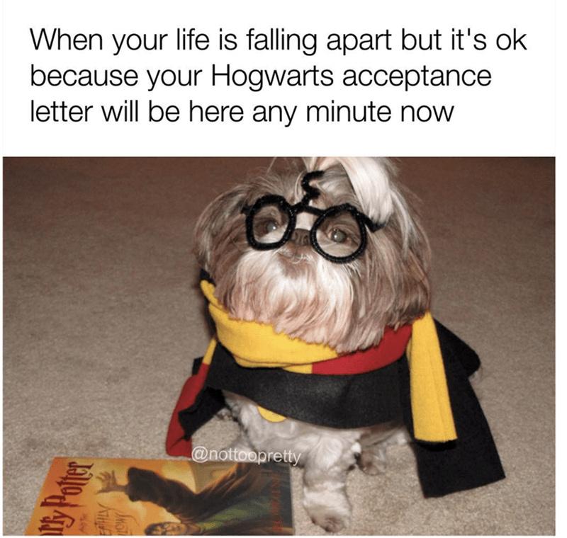 good life - meme