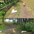 Este perro siguió al hombre de Google maps