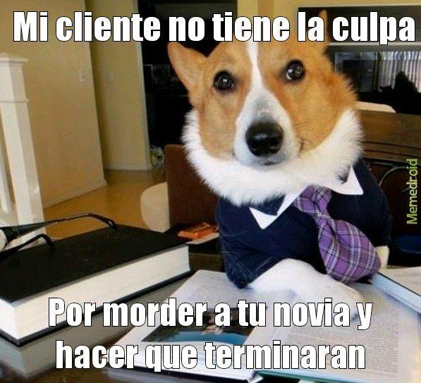 El perro - meme