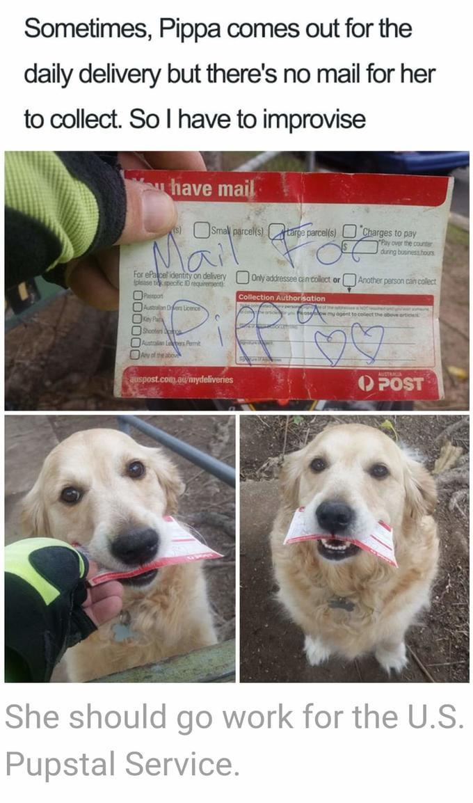 Maybe they don't want to bark at the mailman anymore - meme