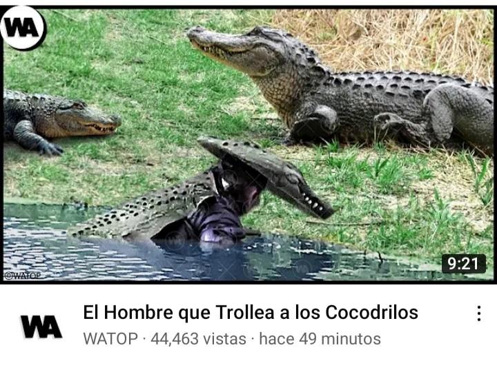 Troleador_cocodrilo - meme