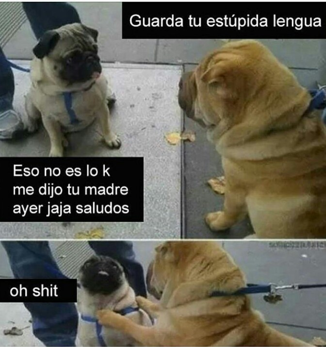 Lucha de perros - meme