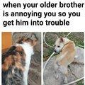 In memory of lomatic310s meme cat