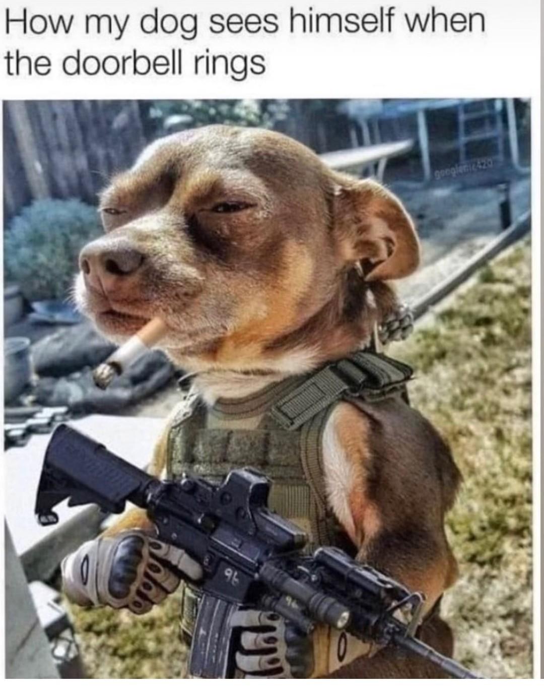 Un vétéran de la guerre du colis - meme