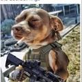 Un vétéran de la guerre du colis
