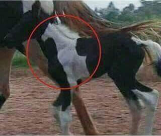 Quien lo diría un caballo en otro - meme