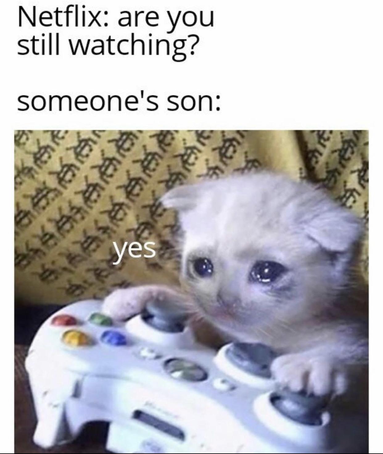 rip sad cat - meme