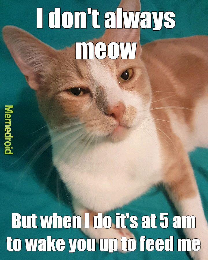 Meow responsibly my friends - meme