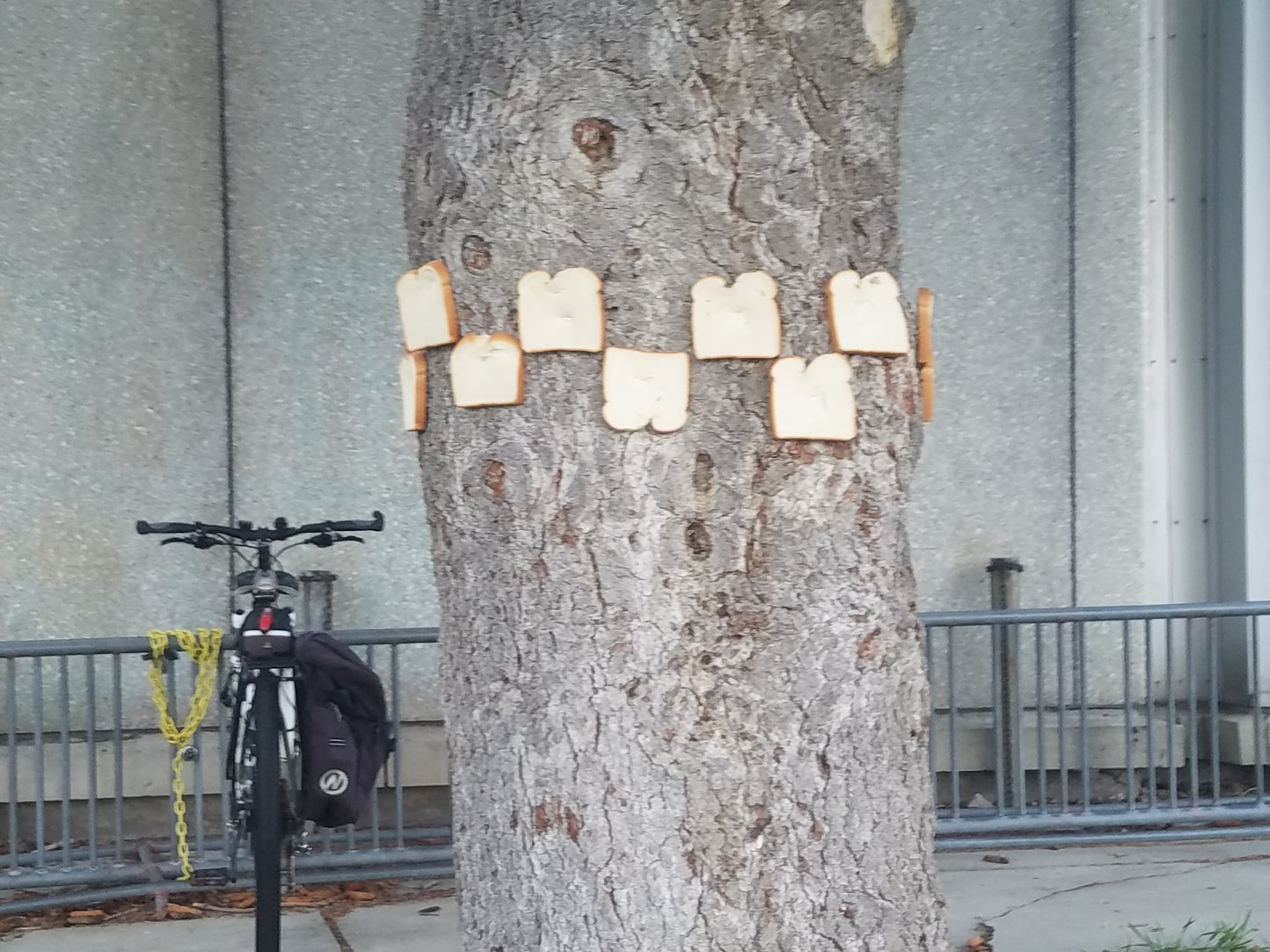 Someone stapled bread to the trees at my school - meme