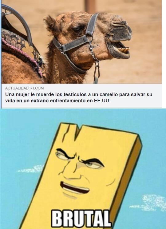 Brutal. pobre camello - meme