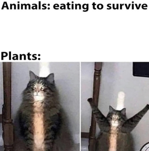 kitty cat - meme