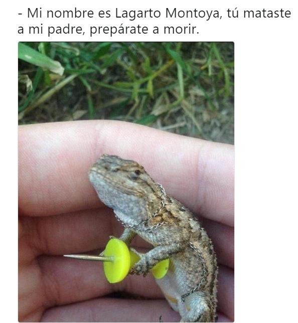 Lagarto Montoya - meme