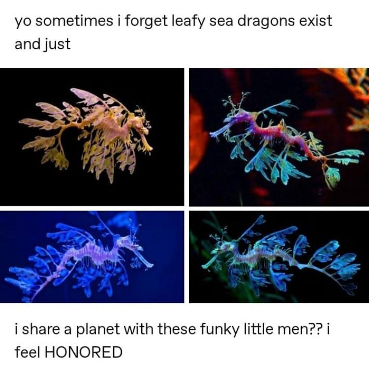 funky seahorses - meme