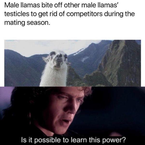 Dark side be wild - meme