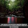 10,000 fireflys