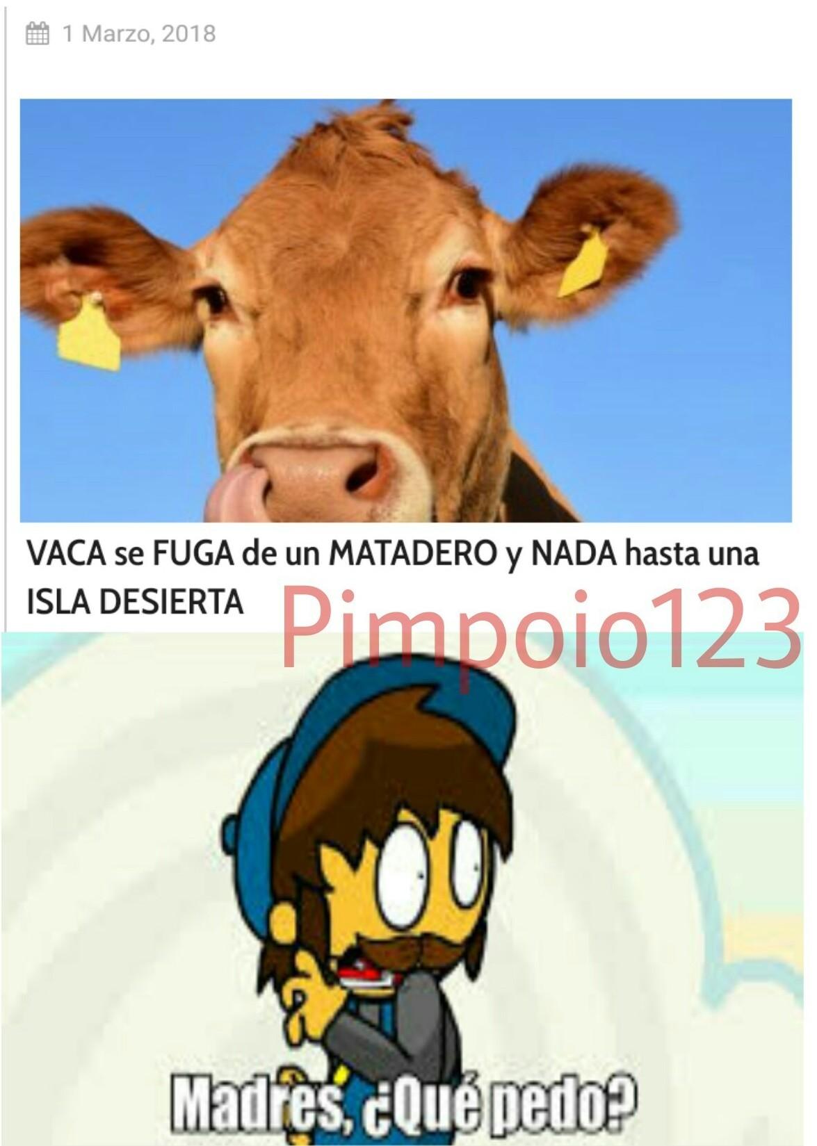 La vaca vergas - meme
