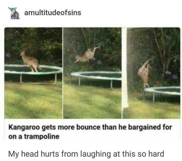 Only in Australia - meme