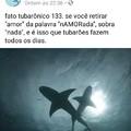 Tubarões...
