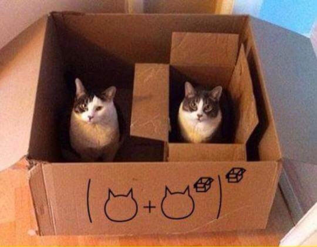 Quand les chats t'apprend les math - meme