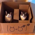 Quand les chats t'apprend les math