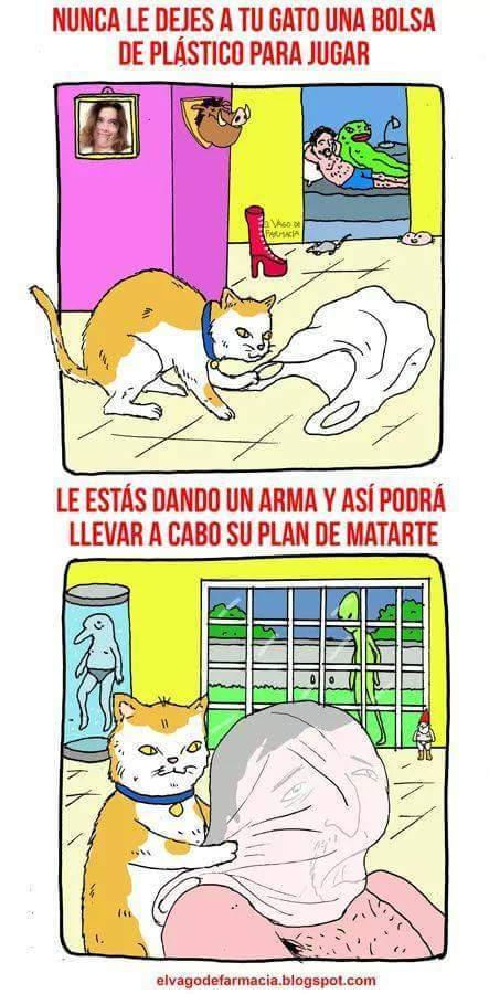 Esos gatos nos gobernarán - meme