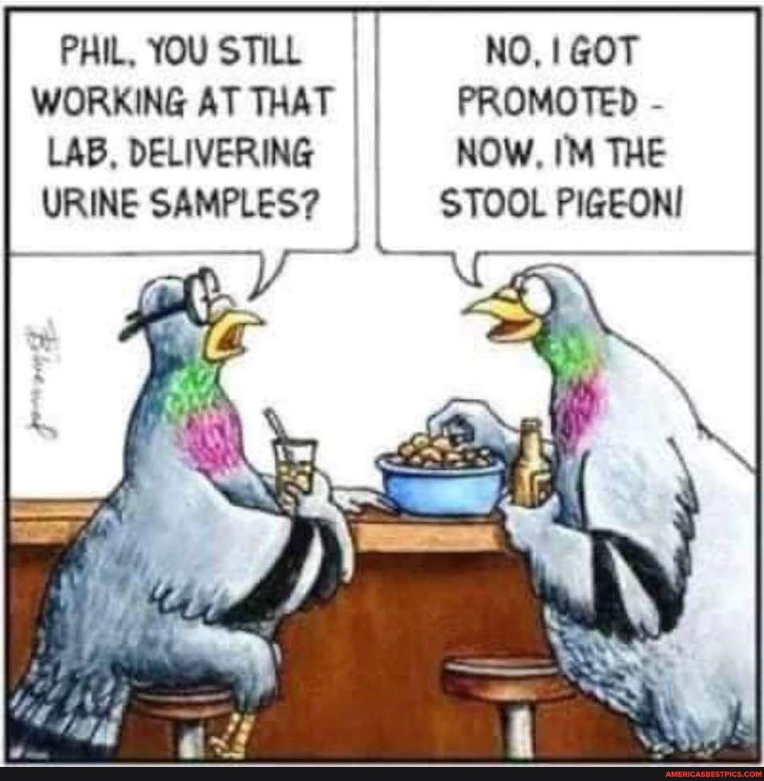 Pigeon Promotion - meme
