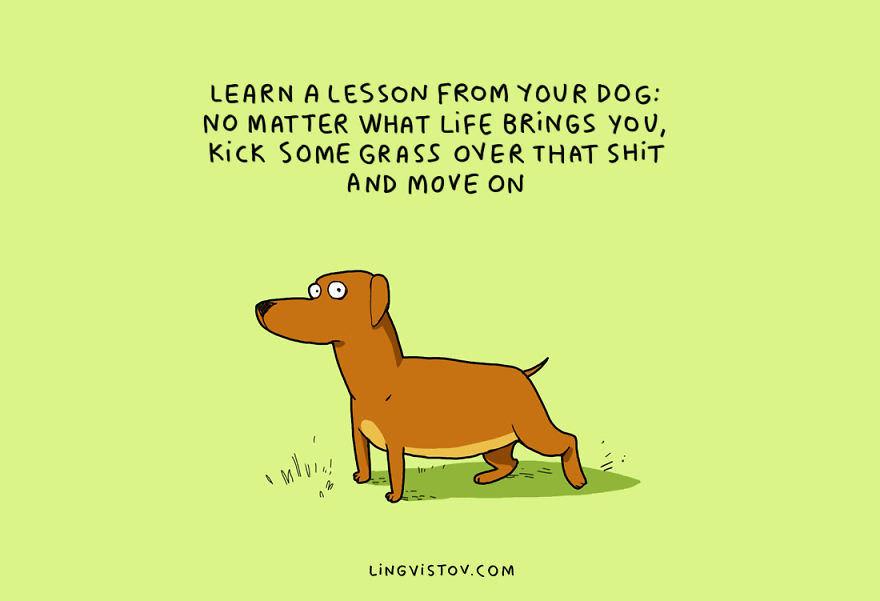 Dog wisdom - meme