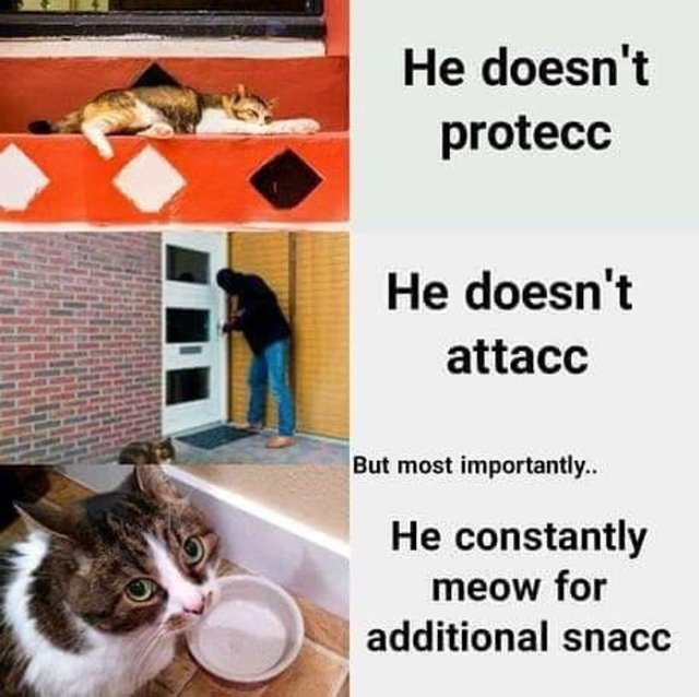 He doesn't protecc, he doesn't attack - meme