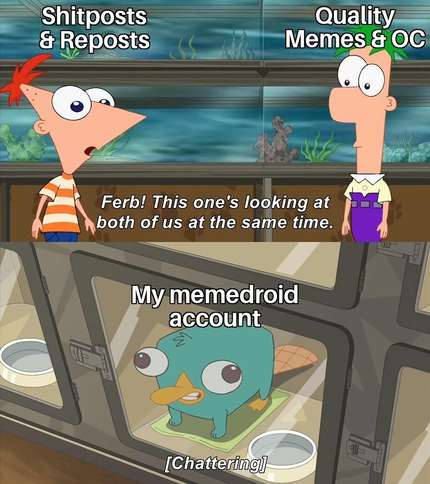 Finias and Ferb - meme