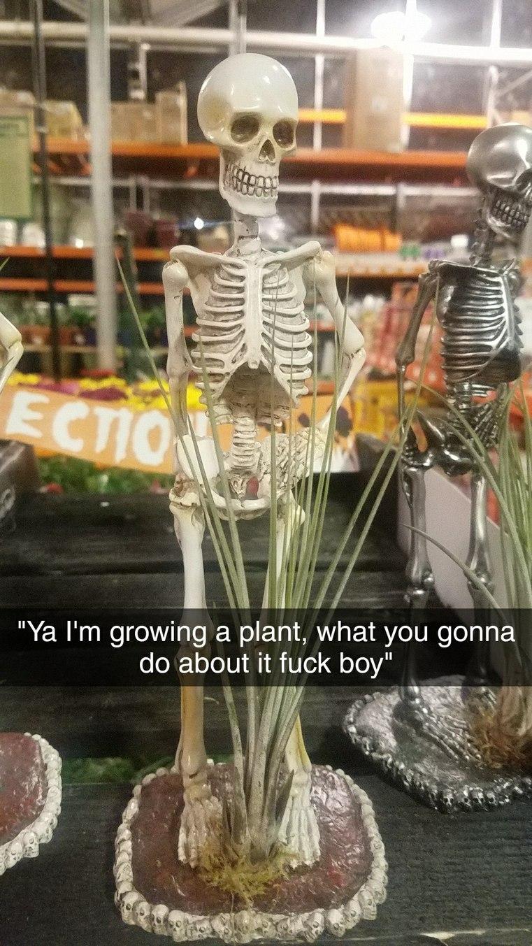 Sassy skeleton - meme
